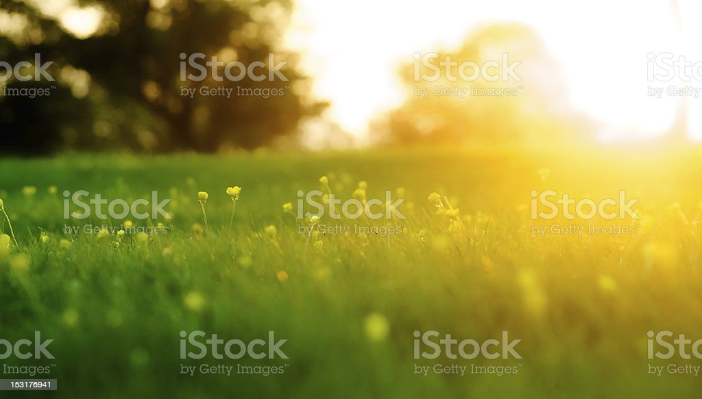 Spring Meadow sunrise stock photo