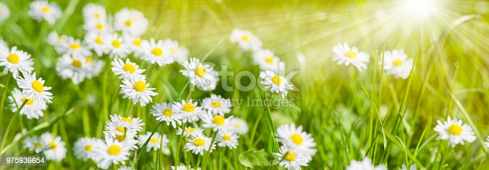 1135260918 istock photo spring meadow with beautiful flowers and sun rays in background 975936654