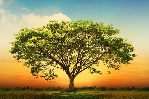 Spring Wiese mit großer Baum mit frischen grünen Blätter – Foto