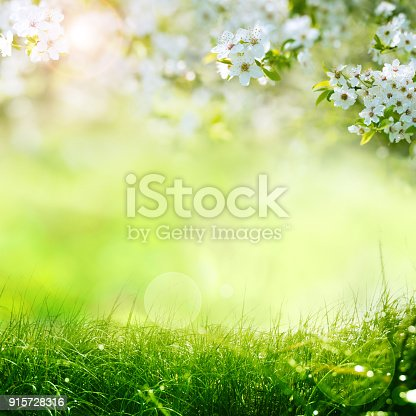 istock Spring meadow with blue sky 915728316