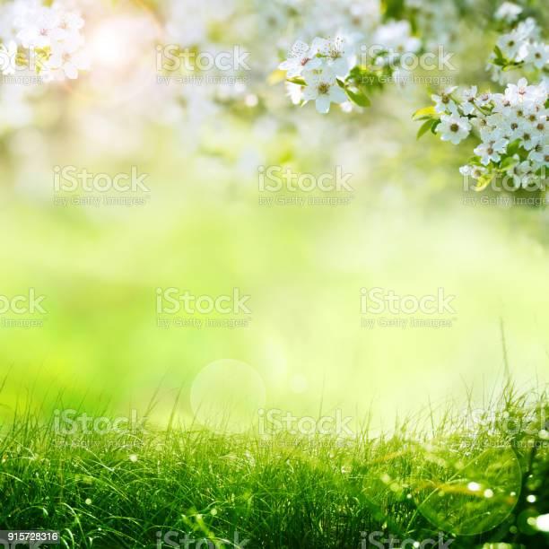 Spring meadow with blue sky picture id915728316?b=1&k=6&m=915728316&s=612x612&h=8xhkokvhm2f mksjjtmbvdjapn1tiqynu3nitza4btc=