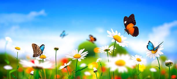 Spring meadow with butterflies picture id470675467?b=1&k=6&m=470675467&s=612x612&w=0&h=jf7jupot4u1exoc6smkep5qvuk5zxwpkfod6hl rvim=