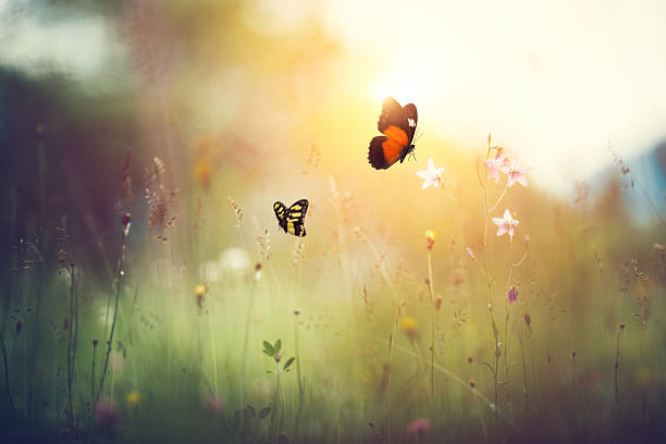 Spring meadow with butterflies picture id506860342?b=1&k=6&m=506860342&s=612x612&w=0&h=2l3mrab4hes8i5t2w2tyhtz2obwgpduojvdpktifjhe=