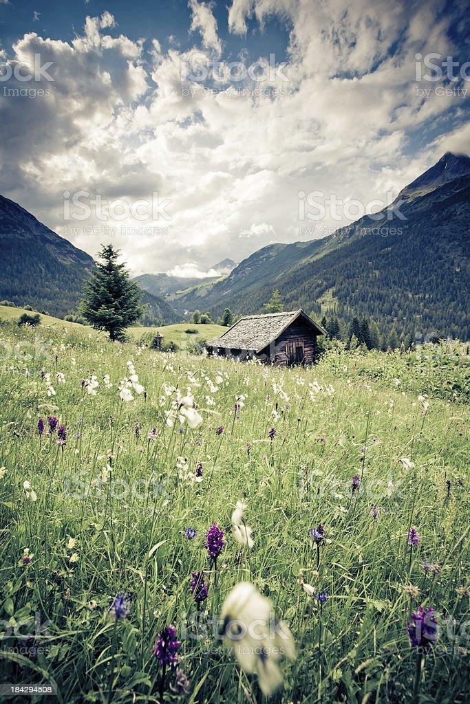 spring Wiese mit Dramatischer Himmel n- tirol, austria- Retro gefilterten – Foto