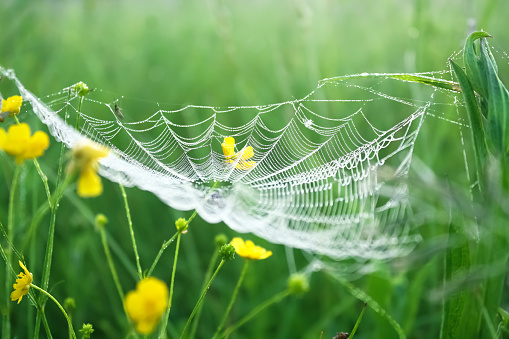 spring meadow with green grass and white spider web, blur background