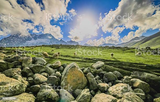 Photo of Spring meadow with Sheep