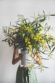Bouquet of fresh Spring blooming Mimosa branches in enamel vase in hands of young woman, white wall at background