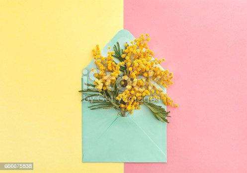 istock Spring mimosa flowers in envelope 666675838