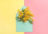 Spring mimosa flowers in envelope on colorful background