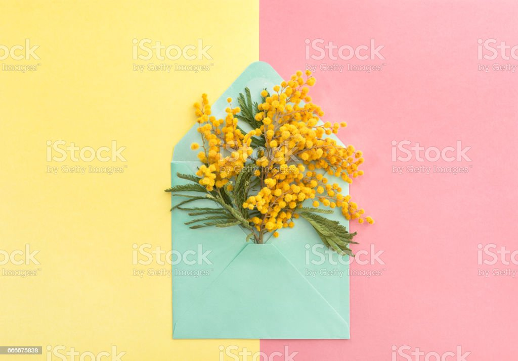 Spring mimosa flowers in envelope stock photo