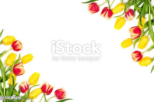 istock Spring mockup. Beautiful red and yellow tulips on white background. Space for your text. Top view. Flat lay 1205786345