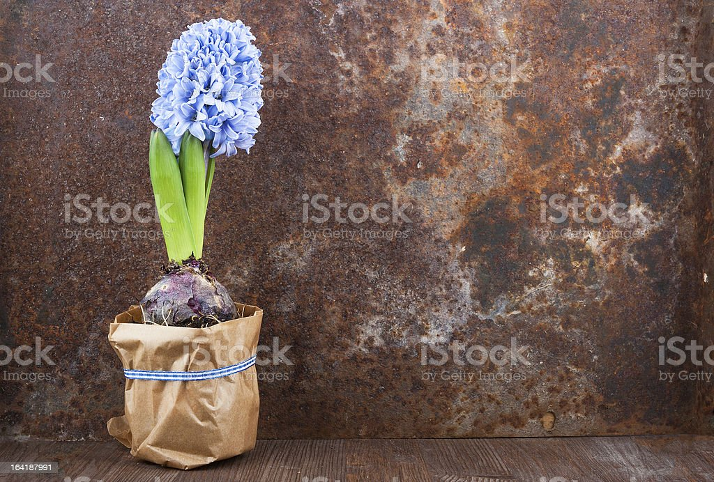 Spring mood royalty-free stock photo