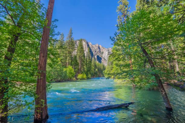 Spring morning at Kings Canyon National Park, CA(P) stock photo