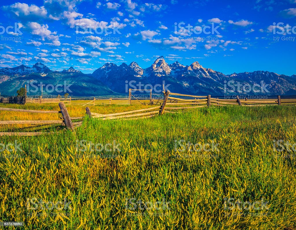 Spring morning with meadow Grand Teton National Park,WY stock photo