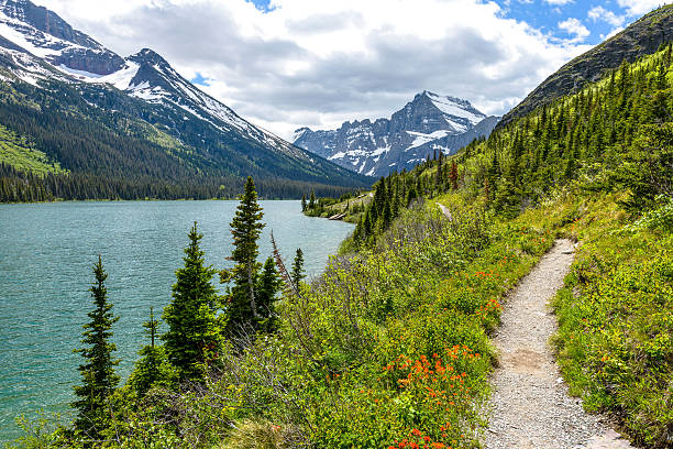 spring mountain hiking trail - us glacier national park stock pictures, royalty-free photos & images