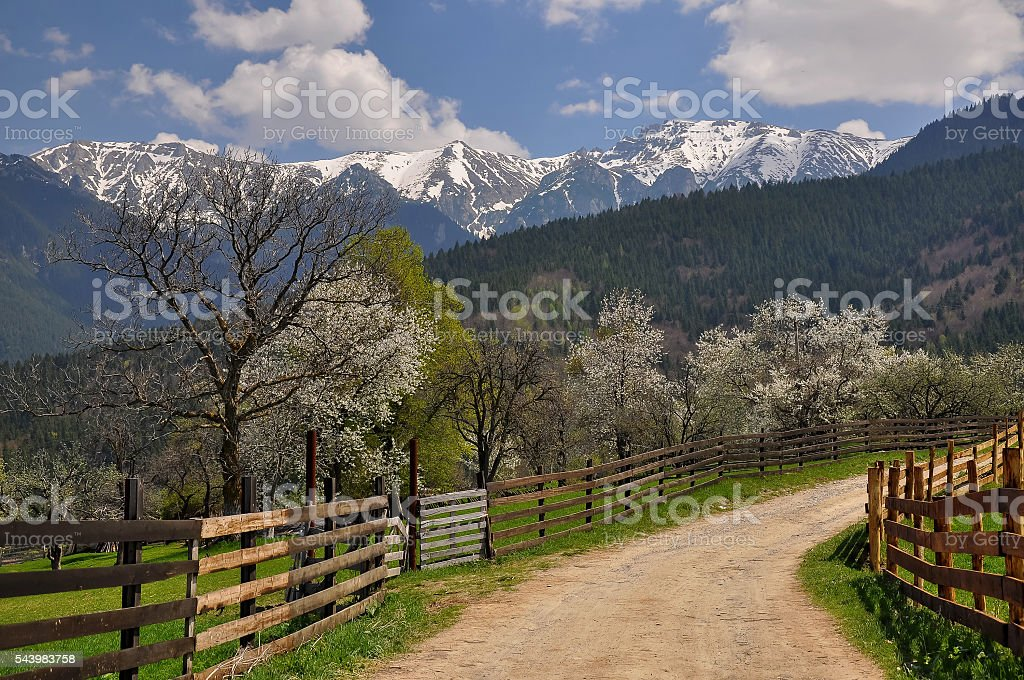 Spring mountain landscape in the Carpathians stock photo
