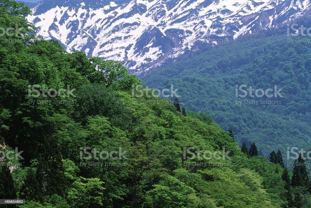 春の山 ロイヤリティフリーストックフォト