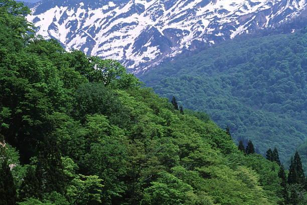 春の山 ストックフォト
