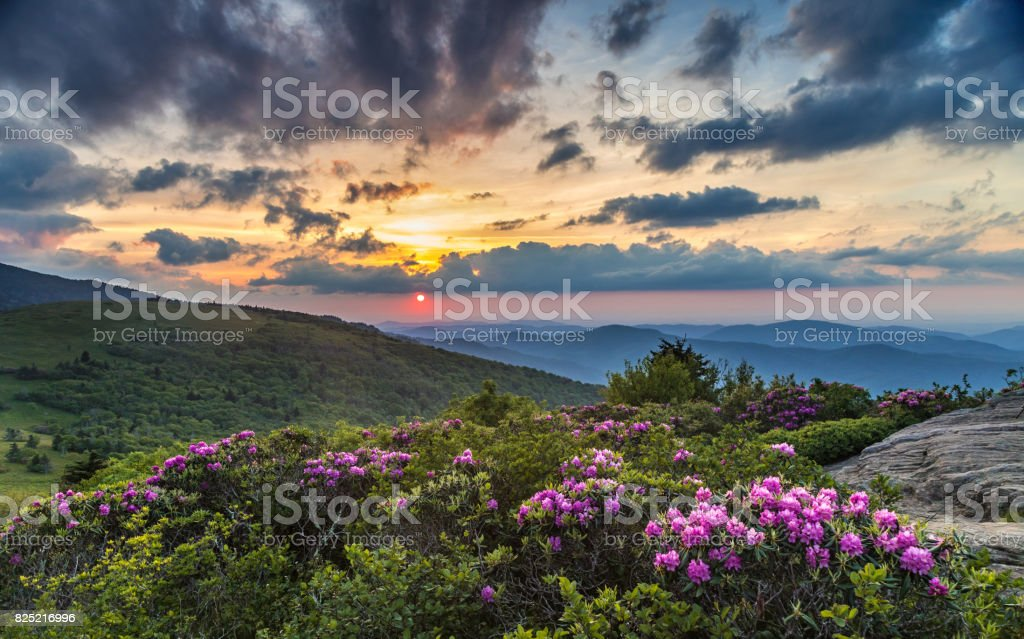 Spring mountain top Sunset with wild flowers stock photo