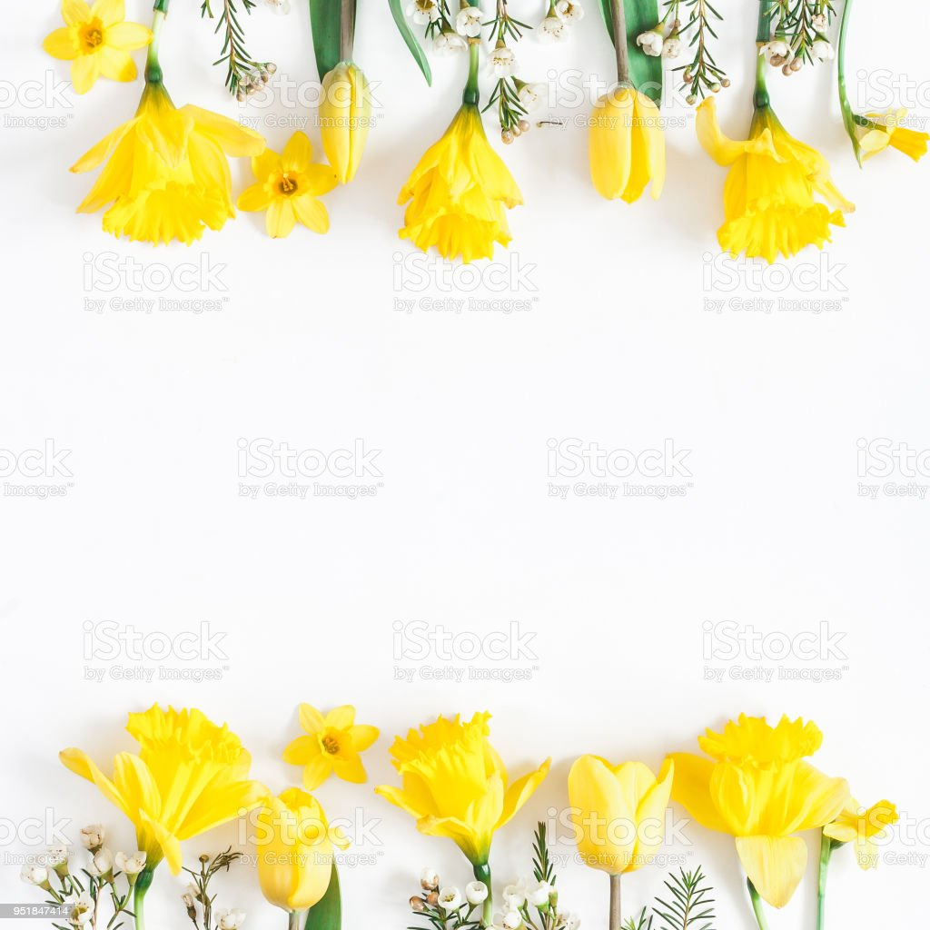 Spring Narcissus And Tulip Flowers Flat Lay Top View Stock Photo