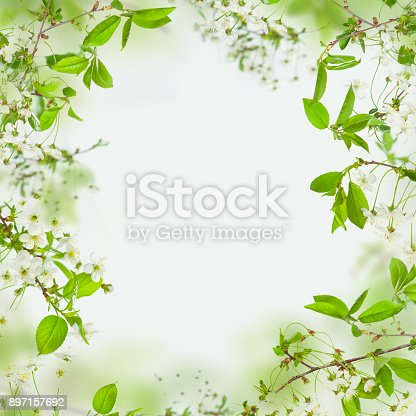 istock Spring nature background, frame of flowers and green leaves 897157692