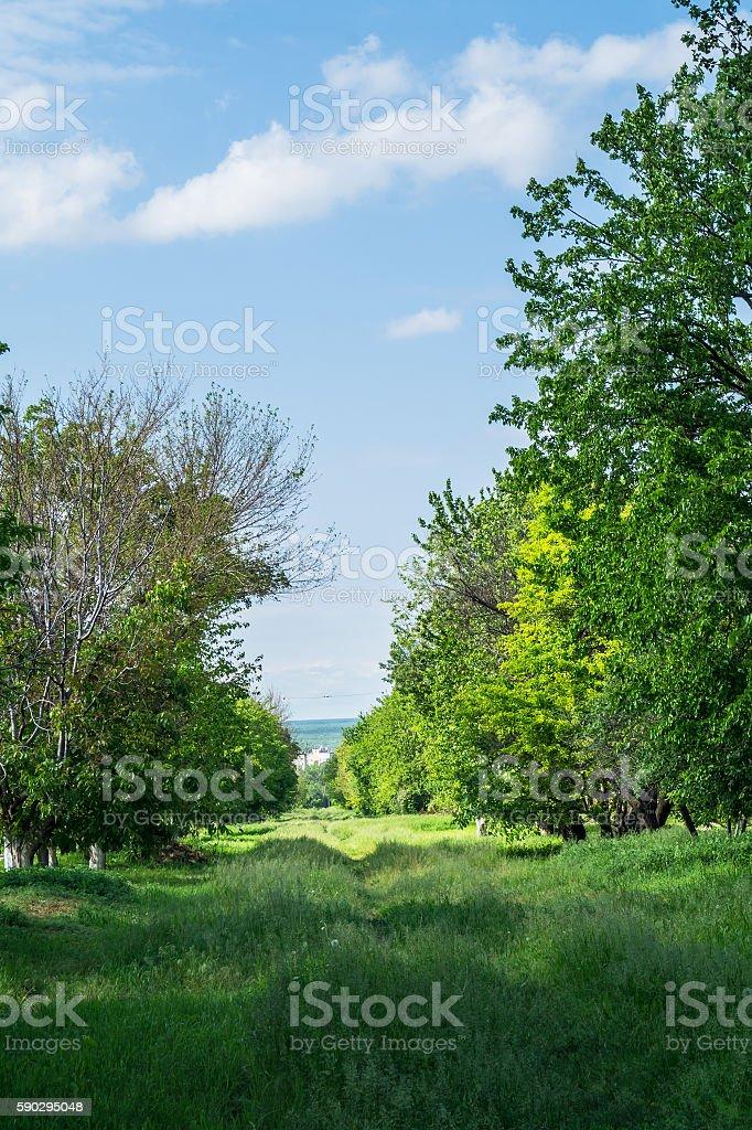 spring nature royaltyfri bildbanksbilder