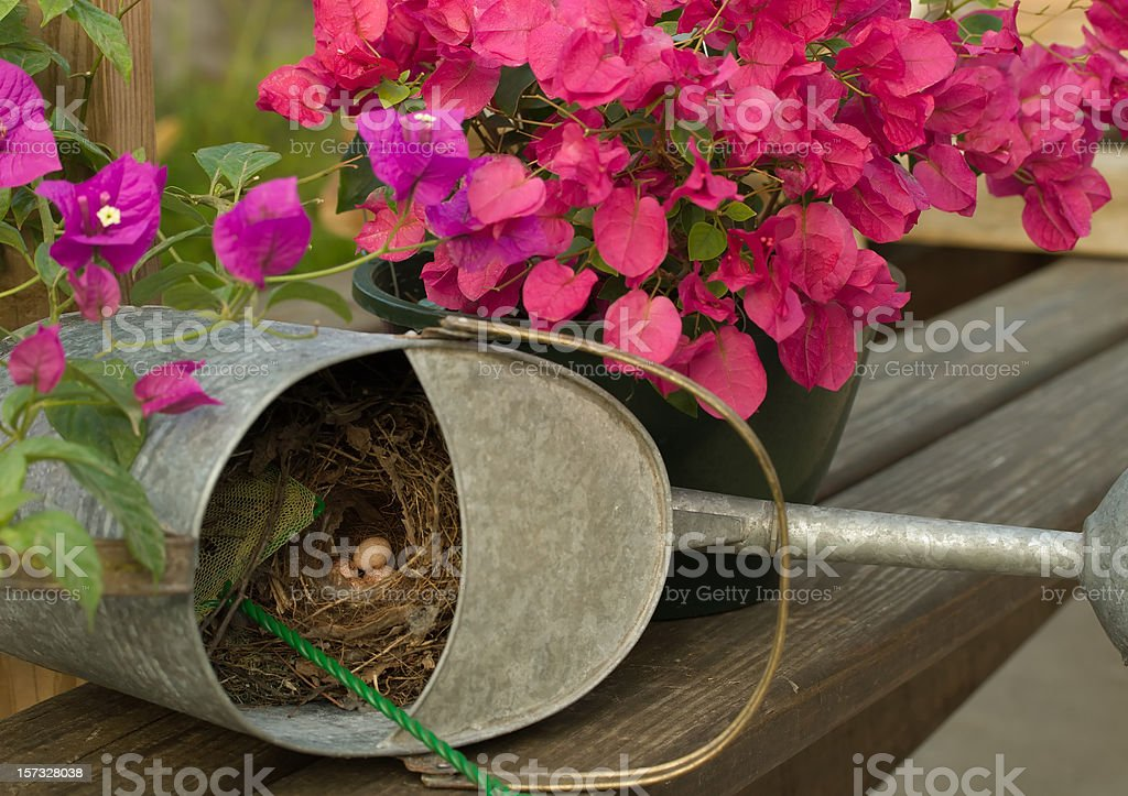Spring Nest royalty-free stock photo