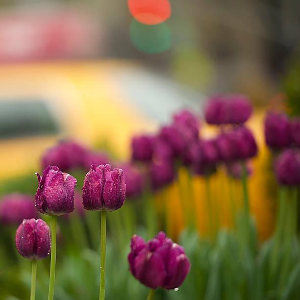 Frühling in NYC – Foto
