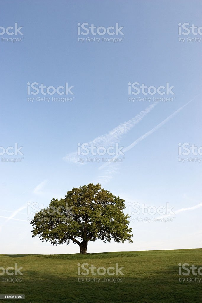 Spring Oak Tree royalty-free stock photo