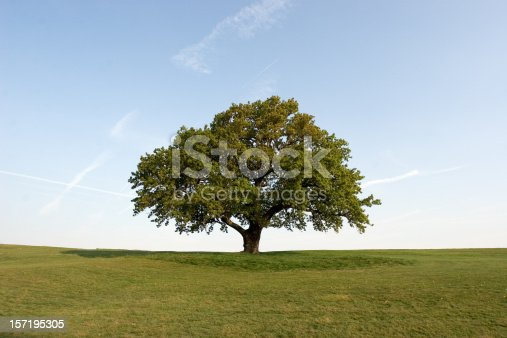 Same tree also available in Winter and Autumn foliage.