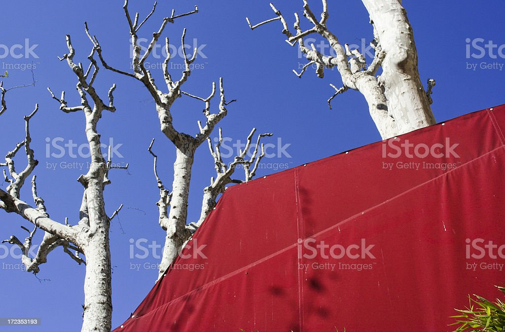 spring on cours mirabeaux in aix de provence royalty-free stock photo