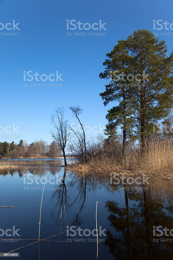 Spring on forest lake royalty-free stock photo