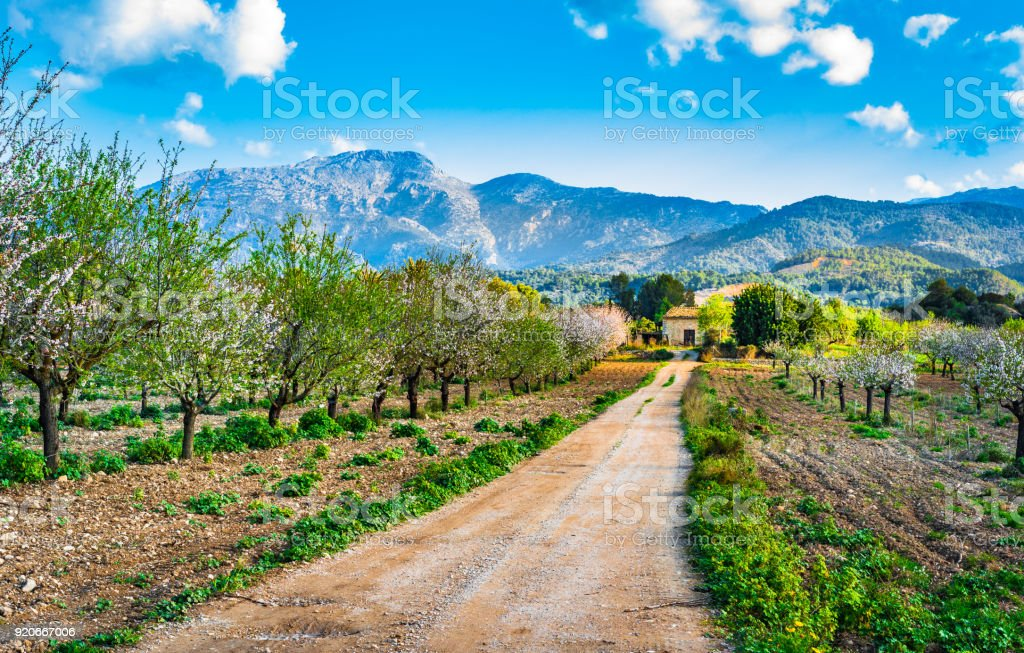 Spring on Majorca island, view of beautiful landscape with mountains and blooming trees - foto stock