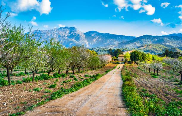 Printemps sur l'île de Majorque, vue du beau paysage de montagnes et de la floraison des arbres - Photo