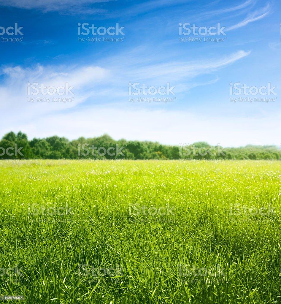 Обои зелень, девочка. природа, настроения, дети, луг, трава на ... | 1024x947