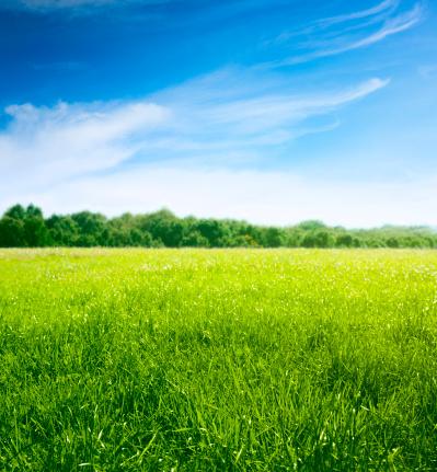 Meadow near forest