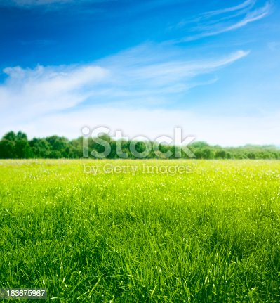 istock Spring on meadow. Fresh grass and beautiful clouds. 163675967