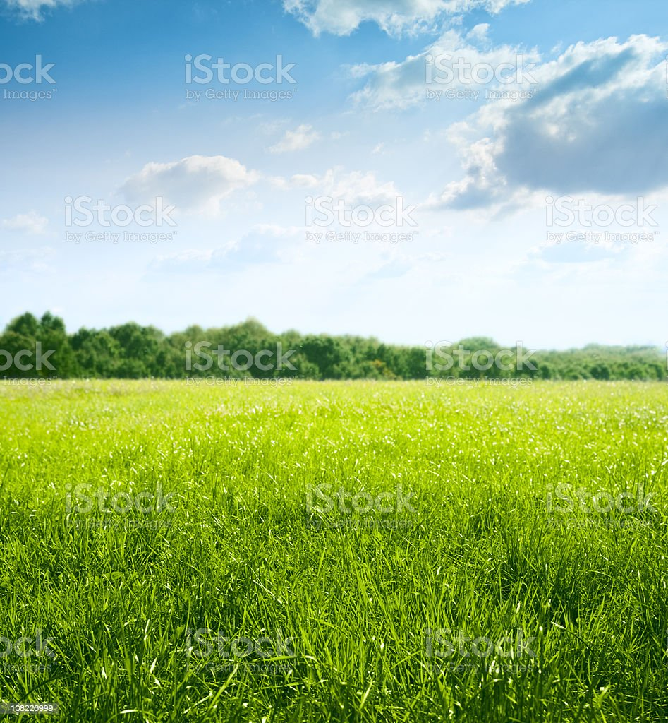 Spring on meadow stock photo