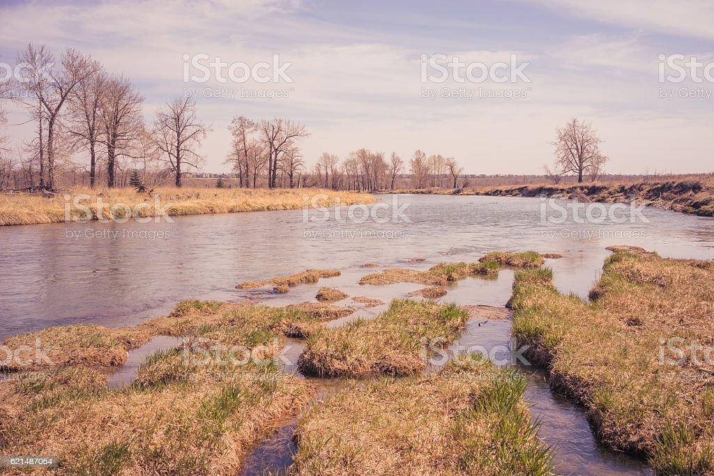 Frühling am Bow River Lizenzfreies stock-foto