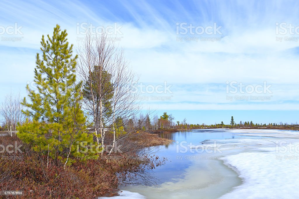 Spring on Yamal stock photo
