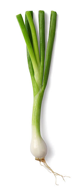 spring onion - sjalot stockfoto's en -beelden