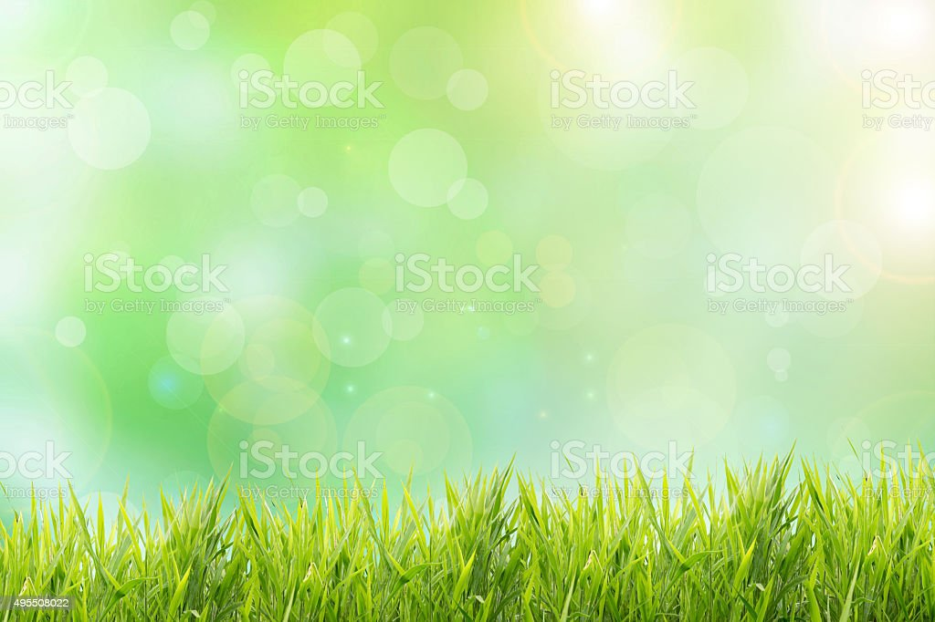 Spring or summer abstract nature background with grass field stock photo