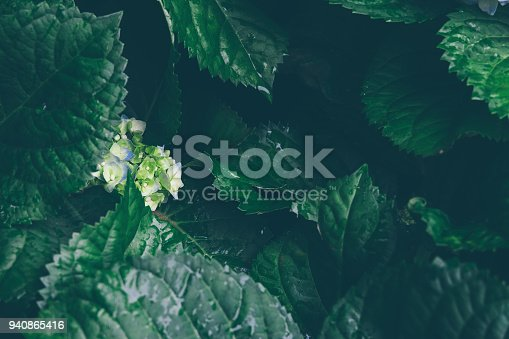 istock Spring or summer abstract scenes. Nature green background. 940865416