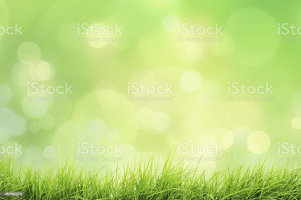 Spring or summer nature landscape with grass and bokeh lights stock photo