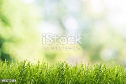 513070488 istock photo Spring or summer with grass field and nature green background 513070488