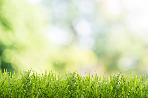 spring or summer with grass field and nature green background - çim stok fotoğraflar ve resimler