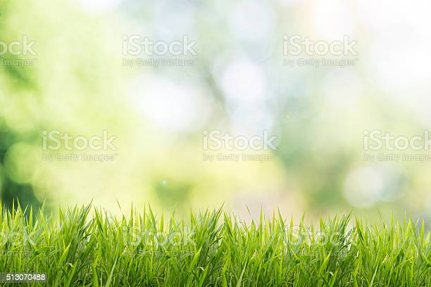 Photo of Spring or summer with grass field and nature green background