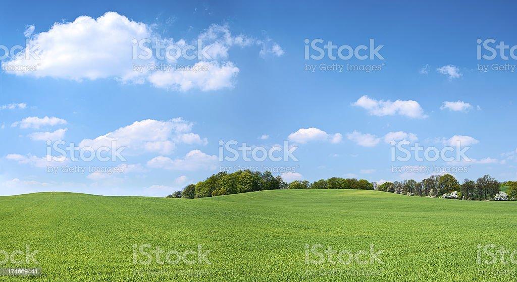 Spring panorama 38MPix XXXXL - meadow, blue sky, clouds stock photo