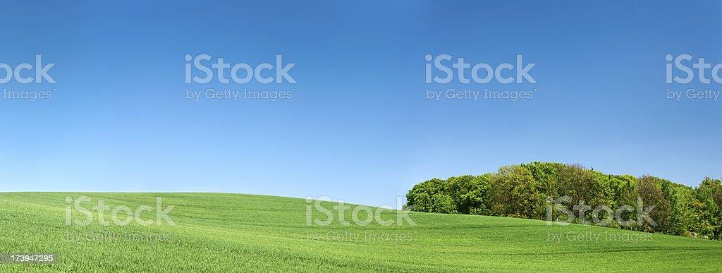 Spring panorama 40MPix XXXXL - meadow, blue sky, clouds royalty-free stock photo