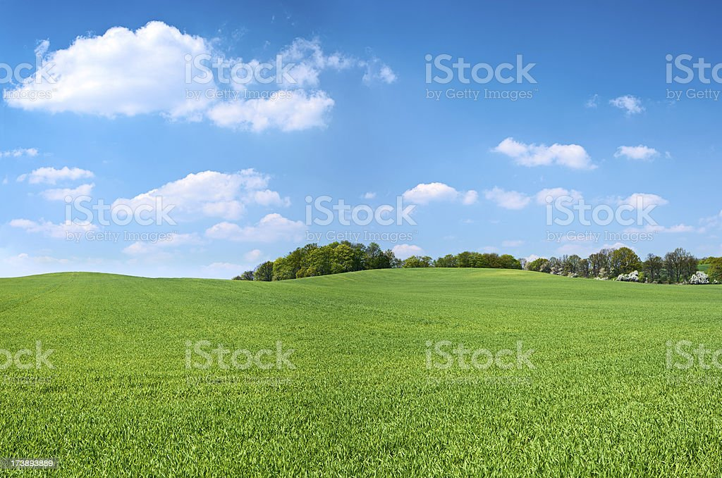 Spring panorama 46MPix XXXXL - meadow, blue sky, clouds stock photo